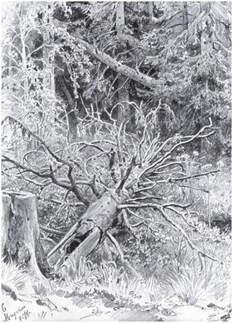 В лесу. Упавшее дерево.