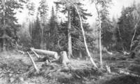 Рубка леса. 1867