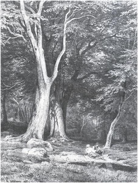 Отдых в лесу/