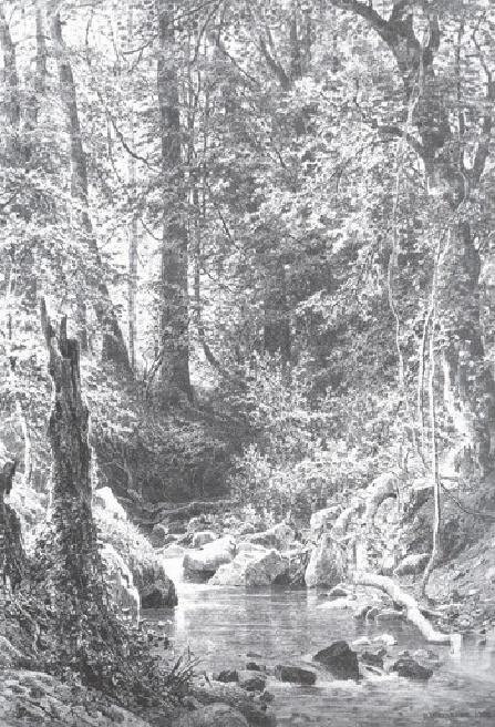 Лесной ручей. 1880