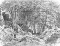 Лиственный лес на скалистом берегу. Валаам. 1859