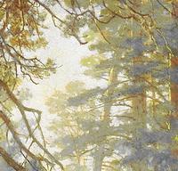 Утро в сосновом лесу (фрагмент)