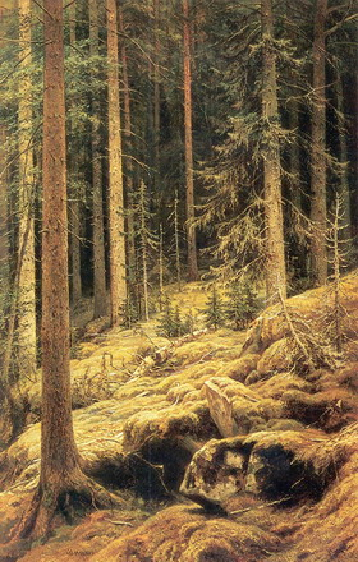 Дебри. 1881